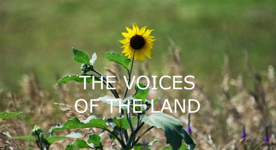 VOICES FLOWER